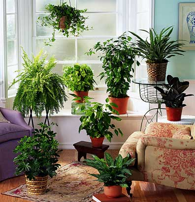 Favorite Things Indoor Plants Lush To Blush