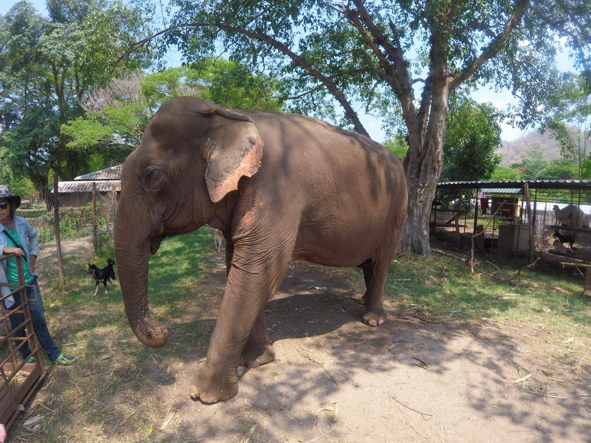 Elephant Nature Park in Chiang Mai, Thailand - Lush to Blush