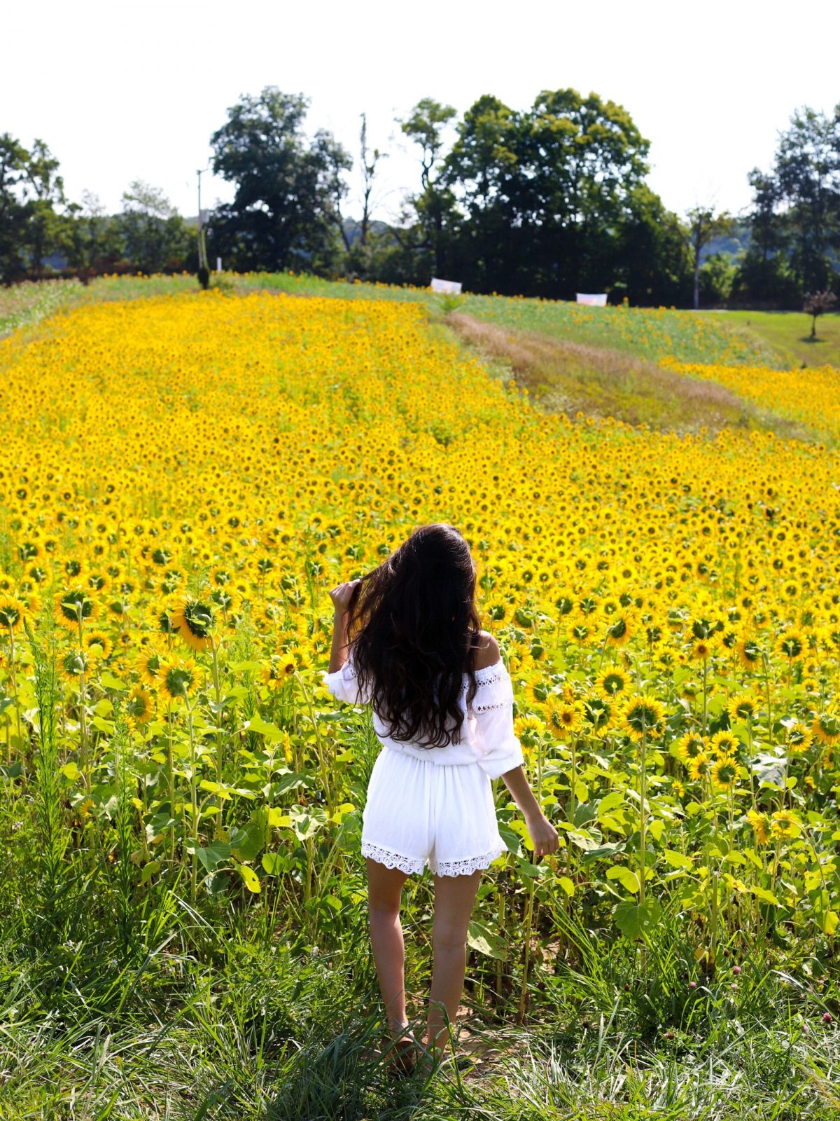 Sunflower fields, sunflower photo shoot, michigan, pure michigan, sunflowers, summer photo shoot ideas, sunflower field in the summer