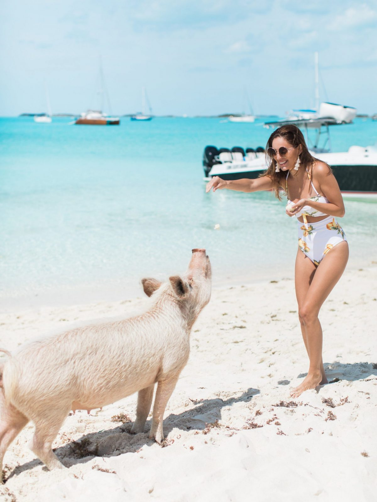 peace n plenty exuma bahamas, exuma travel guide, where to stay in exuma, what to do in exuma, swimming pigs exuma, swimming with sharks exuma, iguanas exuma, where to eat in exuma, what to do in exuma, exuma travel guide
