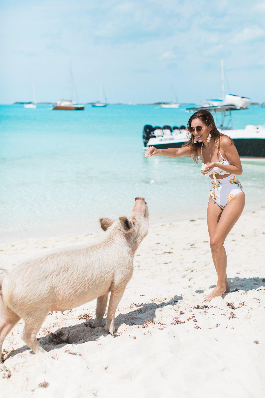 peace n plenty exuma bahamas, exuma travel guide, where to stay in exuma, what to do in exuma, swimming pigs exuma, swimming with sharks exuma, iguanas exuma, where to eat in exuma, what to do in exuma, exuma travel guide