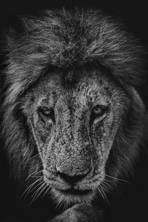 african safari photo diary, the big 5, the big five, african animals, animals on an african safari, south african safari, sabi sands, kruger national park, giraffe, lions, rhinoceros, hippopotamus, zebra, colorful bird, water buffalo, elephants, leopard, kudu, dulini sabi sands, wild dogs, baby monkey, elephant butt
