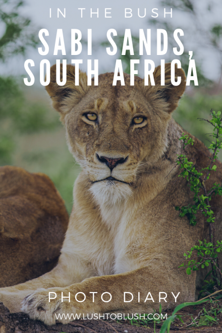 Luxury travel & lifestyle blogger, Megan Elliot at Lush to Blush shares an African Safari Photo Diary! Check it out!